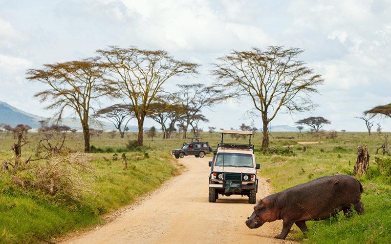 Roadtrip en Afrique : les indispensables